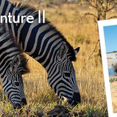Click to see more about African Safari Adventure II