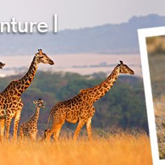 Click to see more about Africa Safari Adventure I