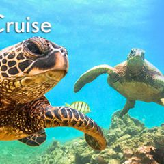 Hawaii Adventure Cruise