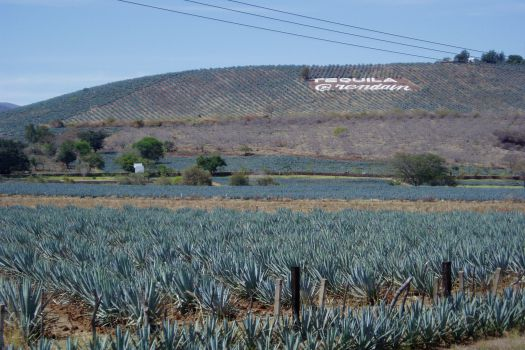 UNESCO Tequila World Heritage Site
