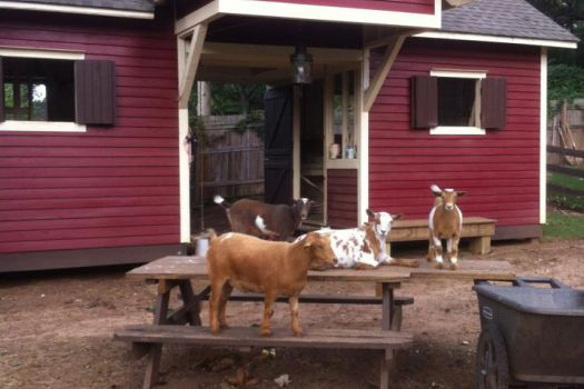 Social Goat Bed and Breakfast