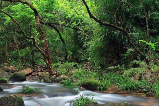 Fireflies Watching  (Tai Po Kau Nature Reserve)