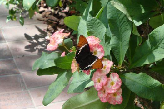 Butterfly and Nature Conservatory