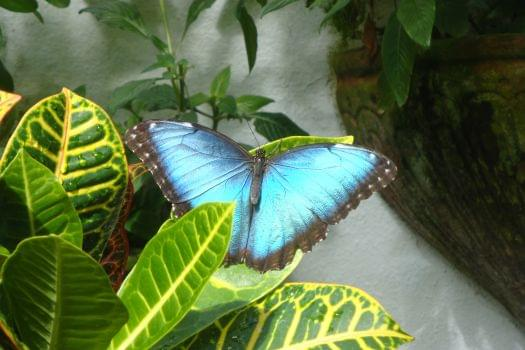 Butterfly & Nature Conservatory Gift Shop