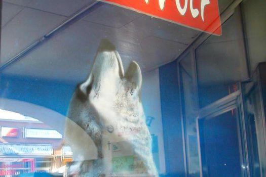 Bergwolf