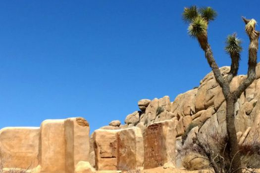 Joshua Tree National Park, Palm Springs, United States