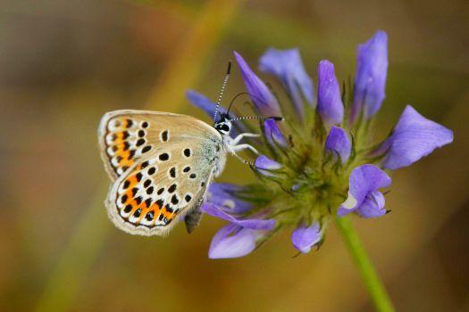 Parc Natural de Garraf