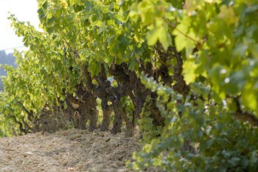Penedès Wine Region, Sitges