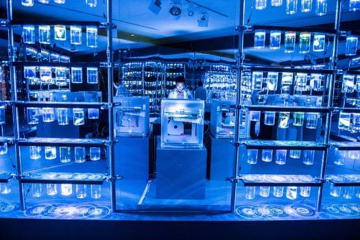 TIFF Bell Lightbox