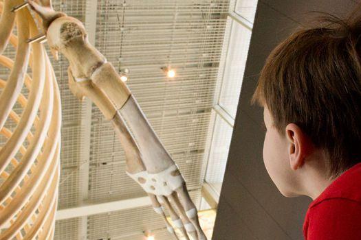 Beaty Biodoversity Museum