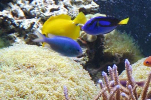 Things to do in washington dc no you won 39 t get bored for Aquarium washington dc