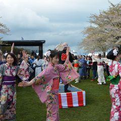 Copenhagen Sakura Festival