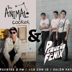Click to see more about The Animal Cookies + Pequeño Fénix en Salón Pata Negra Condesa, Mexico City